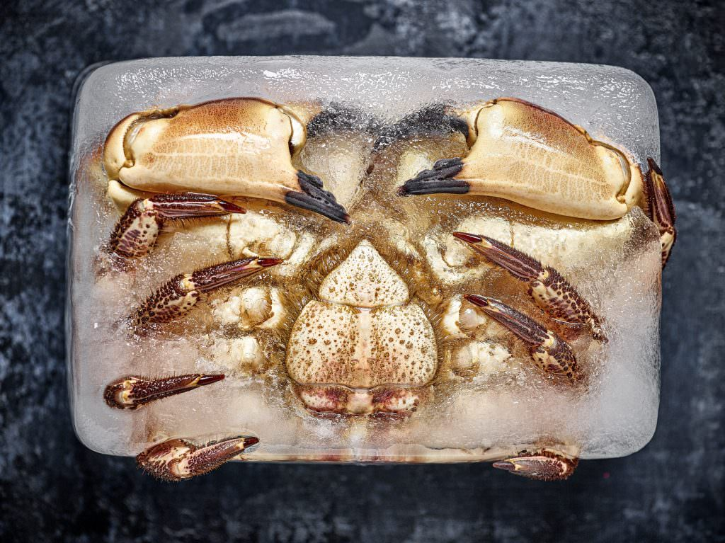 Crab from Leicester Market frozen in a block of ice by scott choucino