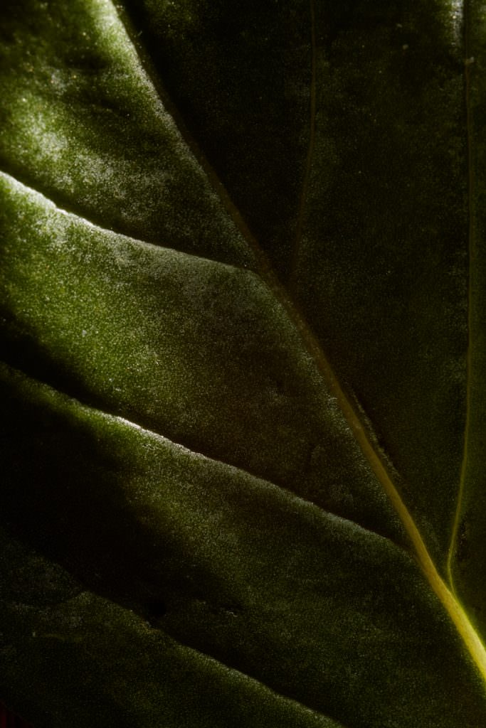 Macro food photography of a herb leaf