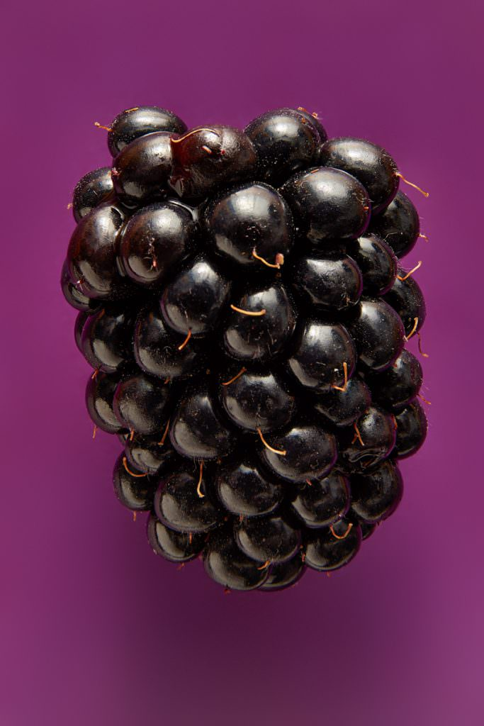 Photography of a blackberry by London represented food photographer scott choucino
